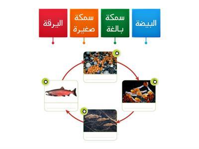 دورة حياة السمكة موارد تعليمية