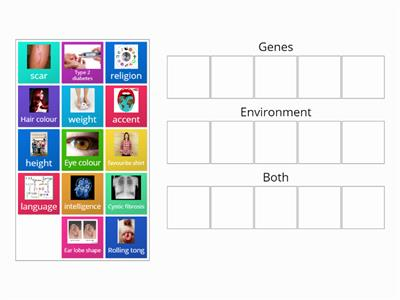 Genes Environment trait sort game