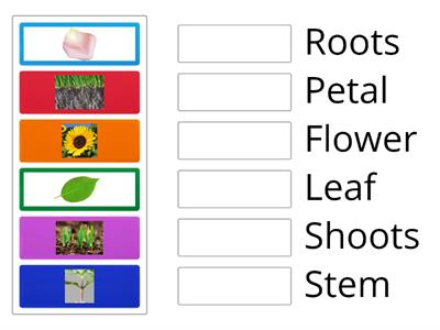 Parts of the Flower Match Up