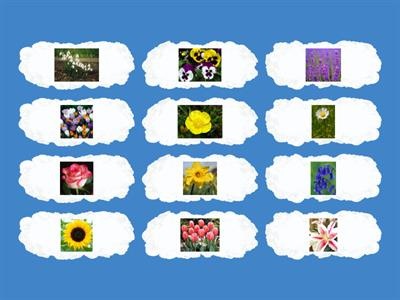 Common flowers Y1