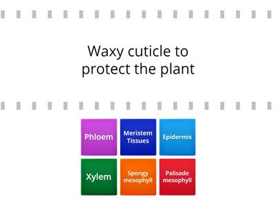 Label plant cell - Teaching resources