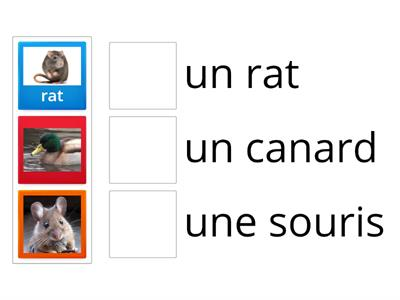 Year 6: animals (french)