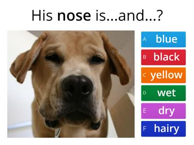 Dog Descriptions - Using Two Adjectives