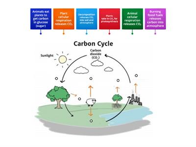 Carbon Cycle Diagram ETO
