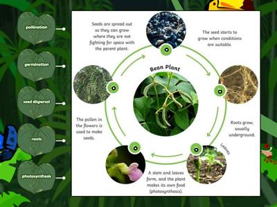 Year 5 Life Cycles - Key Knowledge Life Cycle of a Plant