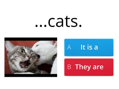 Pets - It is  they are
