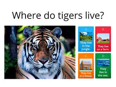 Where do tigers live?