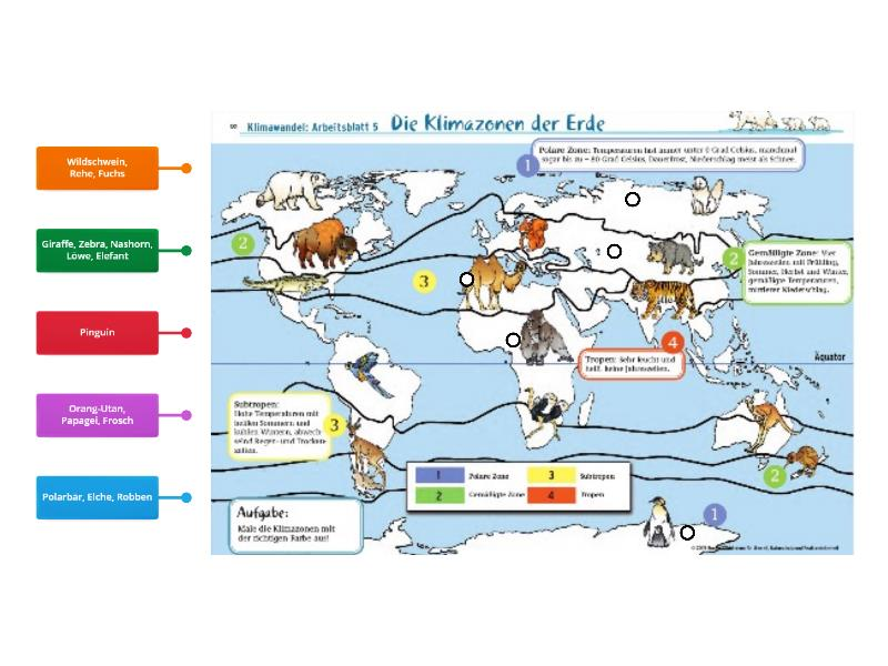 Klimazonen (Fauna) - Teaching resource