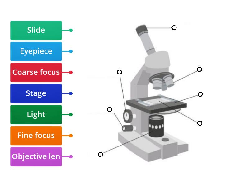 1 1 Labelling Microscope Labelled Diagram