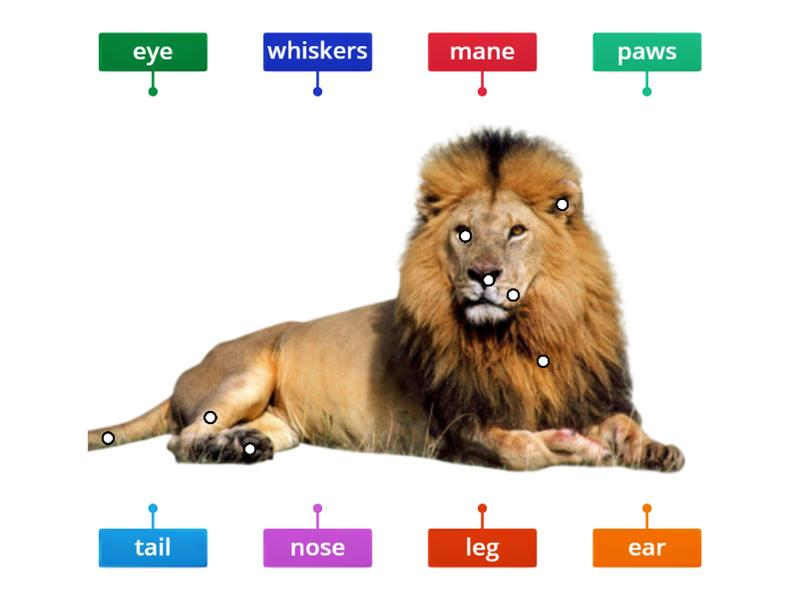 lion body parts labelled diagram Parts of Your Ear