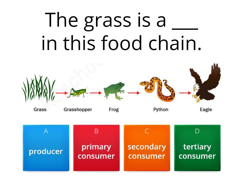 Organisms - Ecosystems - Quiz